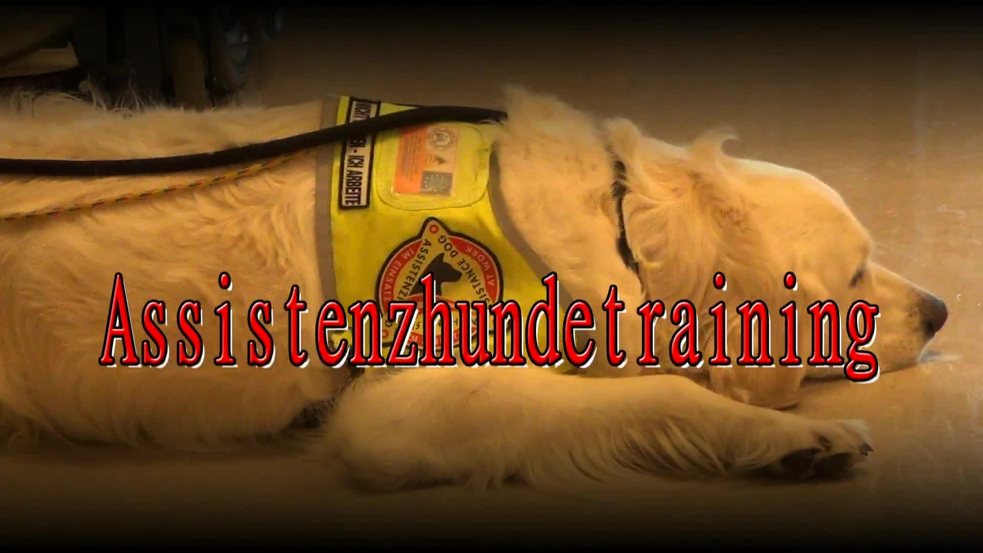 Assistenzhundetraining in der Gusenhalle