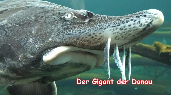 Der Gigant der Donau