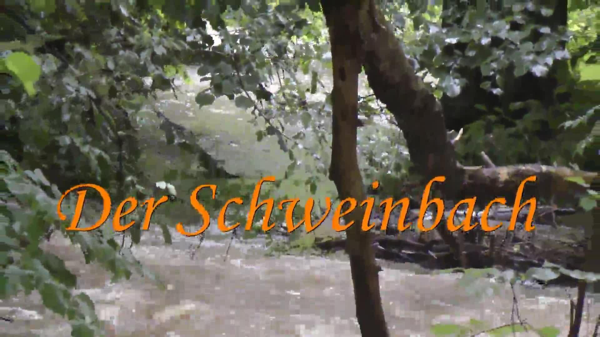 Der Schweinbach-Quelle bis Mündung