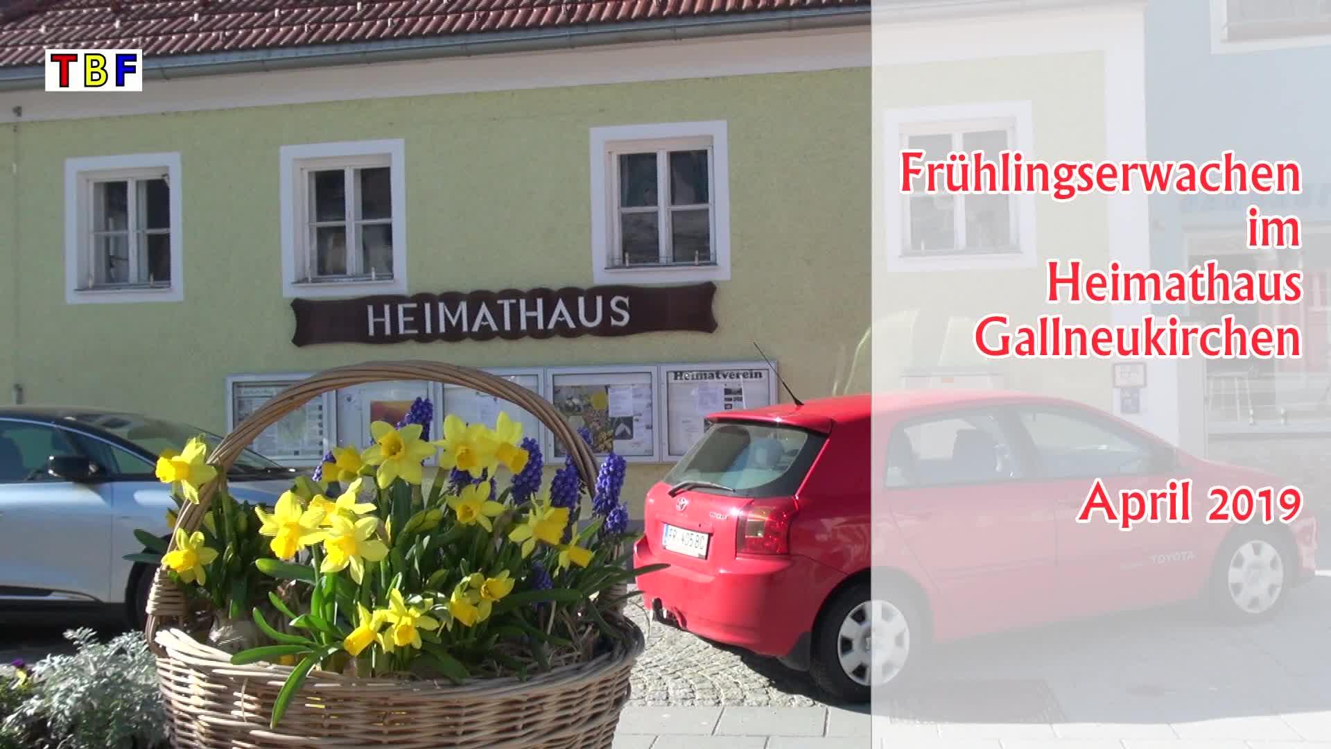 Frühlingserwachen im Heimathaus Gallneukirchen