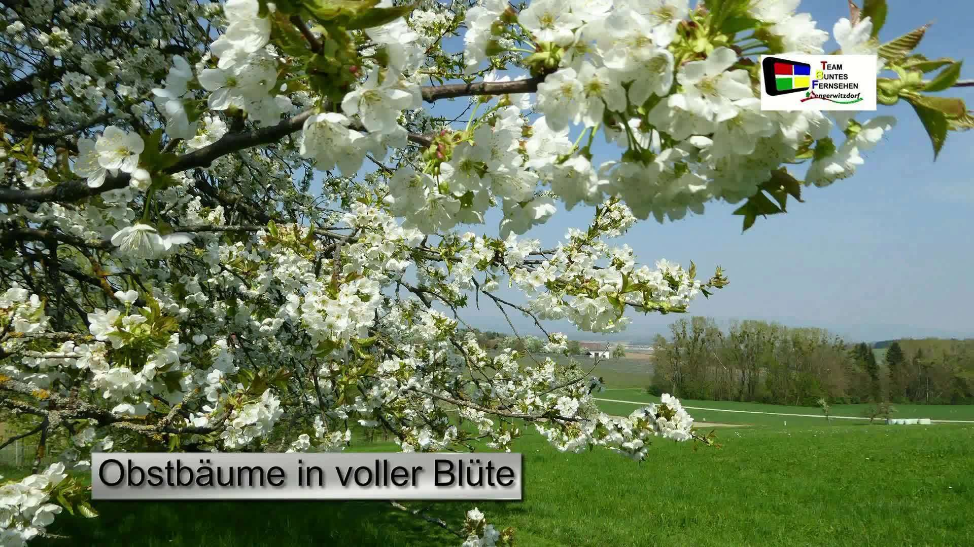 Obstbaumblüte 2018